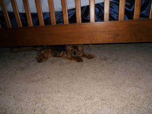 And when all the banging and strange people become too much, Casey hides under the bed.