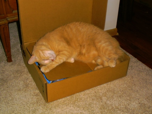 If it is a box, it is considered a Boca Bed