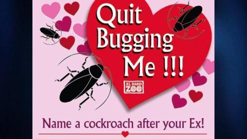 El Paso Bug