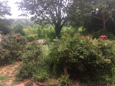 Kincaid backyard